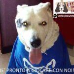 14102234 1634861693510536 565700361083044325 n 150x150 - 24 e 25 Settembre la prima Manifestazione per i Cani e i loro amici a Livorno