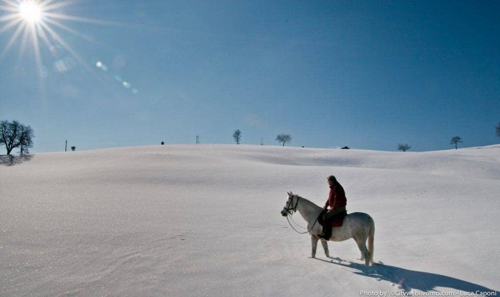 In toscana nasce il 'tecnico equestre'