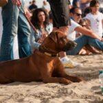 DSC 0847 150x150 - Un'altro successo del Versilia Polo Beach Cup per l'edizione 2014