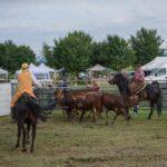 Maggengo Coltano 2016 55 150x150 Si è svolta  il 4 e il 5 Giugno la 5^ edizione della Festa del Maggengo