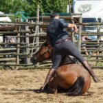 Maggengo Coltano 2016 8149 150x150 Si è svolta  il 4 e il 5 Giugno la 5^ edizione della Festa del Maggengo