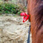 SAM 4633 150x150 - 19° Benedizione degli Animali San Rossore