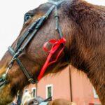 SAM 4747 150x150 - 19° Benedizione degli Animali San Rossore