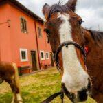 SAM 4750 150x150 - 19° Benedizione degli Animali San Rossore
